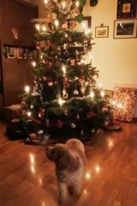 Weihnachtspraline