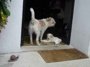 2 furchterregende Wachhunde
