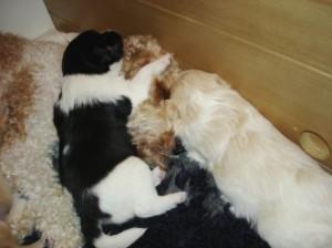Harvey und Hoover kuscheln mit Mama