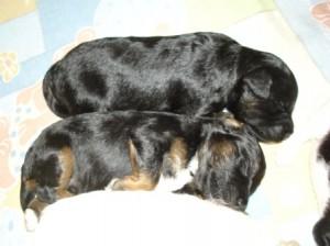Hathi und Hollister im Tiefschlaf