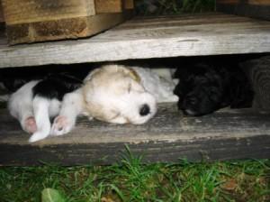 Lieblingsschlafplatz