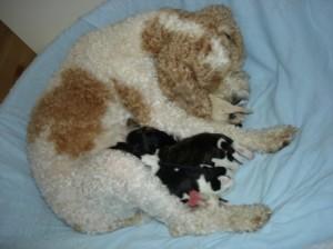 gesäuberte Mama im frischen Bett