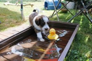 Iannis traut sich in den Pool