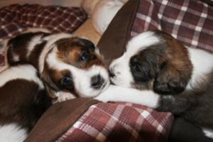 Iuli und Ilvie erzählen sich eine Gute-Nacht-Geschichte
