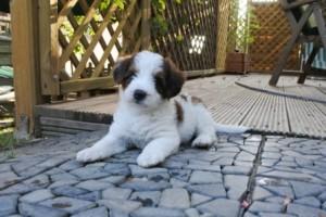 Ivy übt die Wachhundeposition