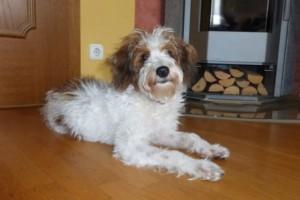 Ivy 6 Monate (4)w