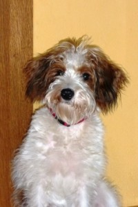 Ivy 6 Monate (6)w