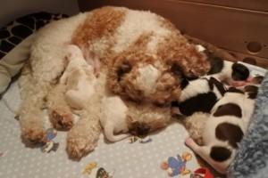 Unter Mamas Ohren ist gut schlafen