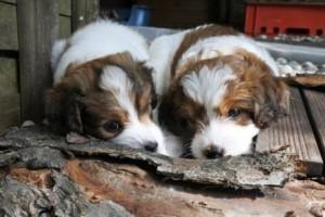 Jalla und Juicy bei der Holzarbeit