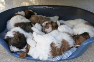 Gruppenschlaf