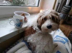 Tee- und Kuschelzeit auf dem Fensterbänkchen