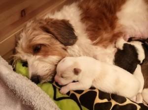 Milli und Lumi ganz müde