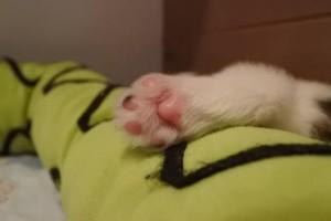 sind so kleine Füßchen